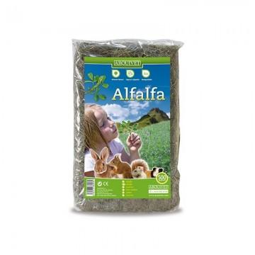 copy of Areia para...